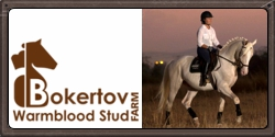 Bokertov Warmblood Stud
