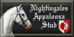 Nightingales Appaloosa Stud