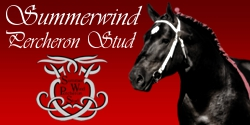 Summerwind Percheron Stud